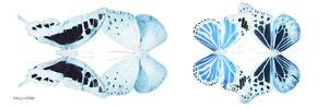 Miss Butterfly X-Ray Duo White Pano II by Philippe Hugonnard