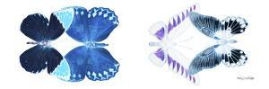Miss Butterfly X-Ray Duo White Pano III by Philippe Hugonnard
