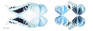 Miss Butterfly X-Ray Duo White Pano IX by Philippe Hugonnard