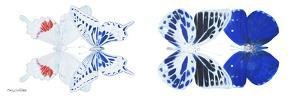 Miss Butterfly X-Ray Duo White Pano V by Philippe Hugonnard