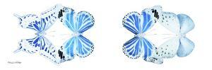 Miss Butterfly X-Ray Duo White Pano VI by Philippe Hugonnard