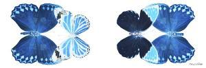 Miss Butterfly X-Ray Duo White Pano VII by Philippe Hugonnard