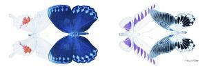 Miss Butterfly X-Ray Duo White Pano VIII by Philippe Hugonnard