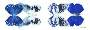 Miss Butterfly X-Ray Duo White Pano X by Philippe Hugonnard