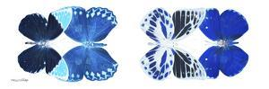 Miss Butterfly X-Ray Duo White Pano XIII by Philippe Hugonnard