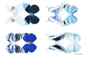 Miss Butterfly X-Ray Duo White VI by Philippe Hugonnard