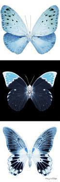 Miss Butterfly X-Ray Pano by Philippe Hugonnard