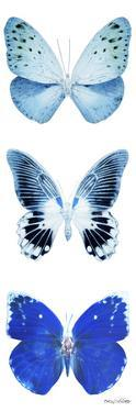 Miss Butterfly X-Ray White Pano II by Philippe Hugonnard