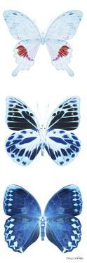 Miss Butterfly X-Ray White Pano by Philippe Hugonnard