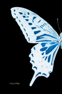 Miss Butterfly Xuthus - X Ray Left Black Edition by Philippe Hugonnard