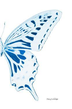 Miss Butterfly Xuthus - X Ray Right White Edition by Philippe Hugonnard