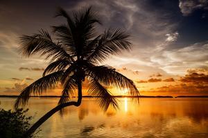 Palm Paradise at Sunset - Florida - USA by Philippe Hugonnard