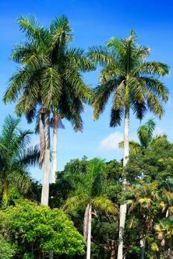 Palm Trees - Everglades National Park - Unesco World Heritage Site - Florida - USA by Philippe Hugonnard
