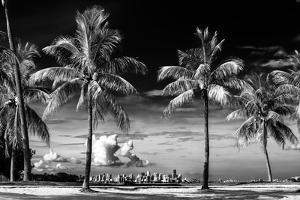Palm Trees overlooking Downtown Miami - Florida by Philippe Hugonnard