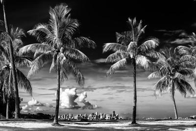 Palm Trees overlooking Downtown Miami - Florida