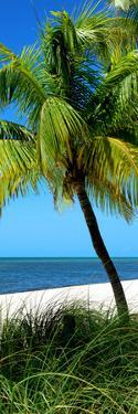 Palms on a White Sand Beach in Key West - Florida by Philippe Hugonnard
