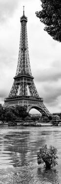 Paris sur Seine Collection - Solitary Tree II by Philippe Hugonnard