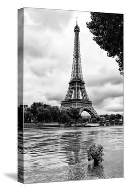 Paris sur Seine Collection - Solitary Tree by Philippe Hugonnard