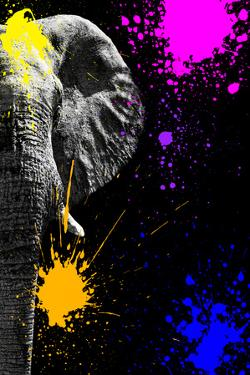 Safari Colors Pop Collection - Elephant Portrait IV by Philippe Hugonnard