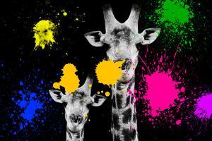 Safari Colors Pop Collection - Giraffes Portrait II by Philippe Hugonnard