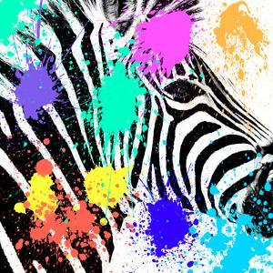 Safari Colors Pop Collection - Zebra Portrait by Philippe Hugonnard