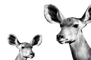 Safari Profile Collection - Antelope and Baby White Edition II by Philippe Hugonnard