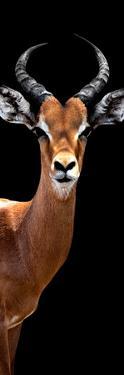 Safari Profile Collection - Antelope Black Edition IV by Philippe Hugonnard