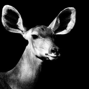 Safari Profile Collection - Antelope Impala Portrait Black Edition VI by Philippe Hugonnard