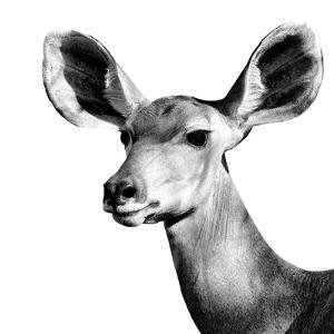 Safari Profile Collection - Antelope Impala Portrait White Edition VI by Philippe Hugonnard