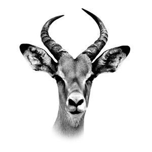 Safari Profile Collection - Antelope Portrait White Edition III by Philippe Hugonnard