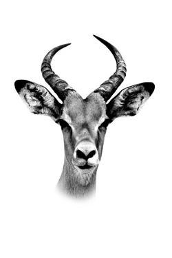 Safari Profile Collection - Antelope Portrait White Edition by Philippe Hugonnard
