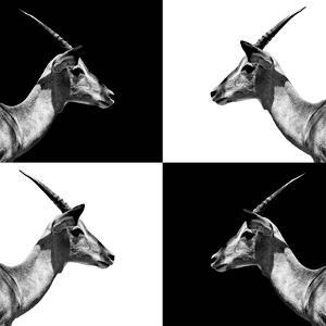 Safari Profile Collection - Antelopes Impalas II by Philippe Hugonnard