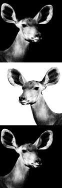 Safari Profile Collection - Antelopes Impalas Portraits III by Philippe Hugonnard