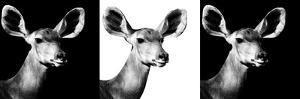 Safari Profile Collection - Antelopes Impalas Portraits IV by Philippe Hugonnard