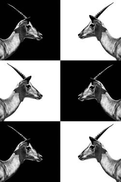 Safari Profile Collection - Antelopes Impalas by Philippe Hugonnard