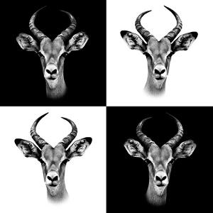 Safari Profile Collection - Antepoles Portraits II by Philippe Hugonnard