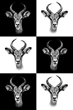 Safari Profile Collection - Antepoles Portraits by Philippe Hugonnard