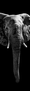 Safari Profile Collection - Elephant Black Edition II by Philippe Hugonnard
