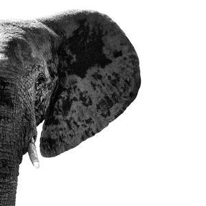 Safari Profile Collection - Elephant Portrait White Edition III by Philippe Hugonnard