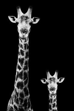 Safari Profile Collection - Giraffe and Baby Black Edition II by Philippe Hugonnard