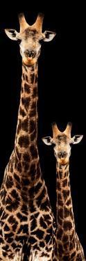 Safari Profile Collection - Giraffe and Baby Black Edition III by Philippe Hugonnard