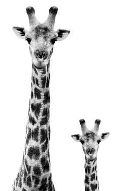 Safari Profile Collection - Giraffe and Baby White Edition II by Philippe Hugonnard