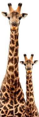 Safari Profile Collection - Giraffe and Baby White Edition III by Philippe Hugonnard