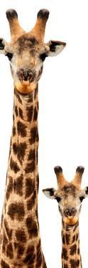 Safari Profile Collection - Giraffe and Baby White Edition V by Philippe Hugonnard
