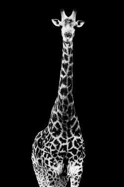 Safari Profile Collection - Giraffe Black Edition II by Philippe Hugonnard