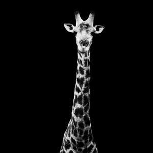 Safari Profile Collection - Giraffe Black Edition VI by Philippe Hugonnard