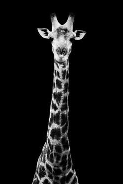Safari Profile Collection - Giraffe Black Edition VIII by Philippe Hugonnard