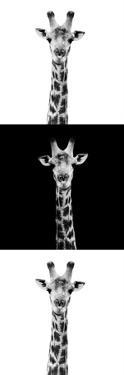 Safari Profile Collection - Giraffes IV by Philippe Hugonnard