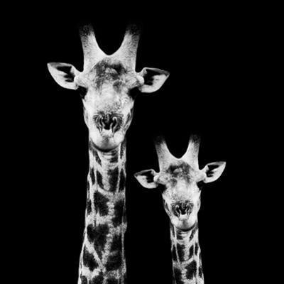 Safari Profile Collection - Portrait of Giraffe and Baby Black Edition II
