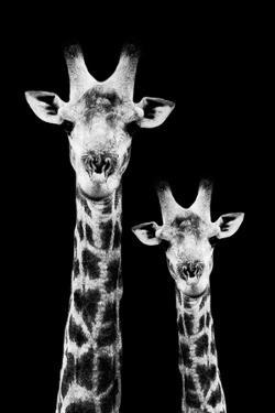 Safari Profile Collection - Portrait of Giraffe and Baby Black Edition IV by Philippe Hugonnard